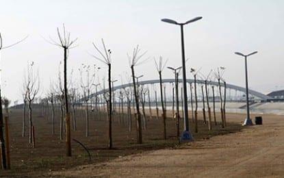 İzmit doğu sahili ağaçlandırılıyor