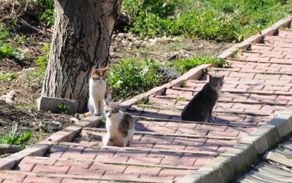Kediler Evlerini Sevdi