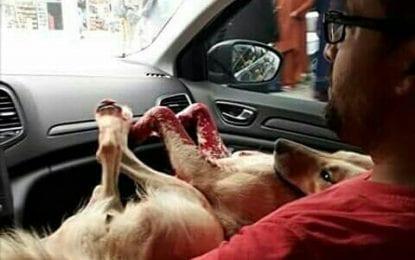 Köpek Katliamı Körfez'e Sıçradı