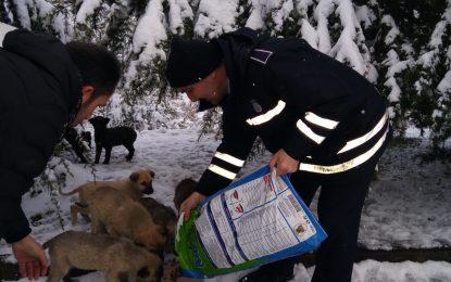 İzmit Belediyesi sokak hayvanlarını unutmuyor
