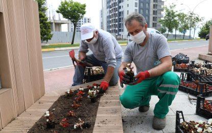 İzmit'in parklarında rengârenk çiçekler açtı